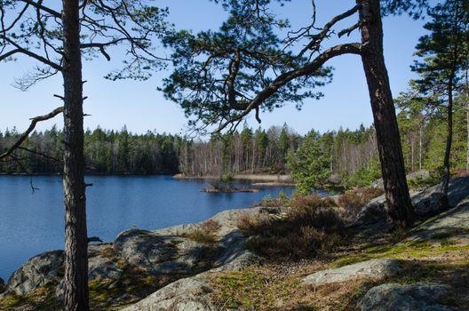 Woodland lake scenery