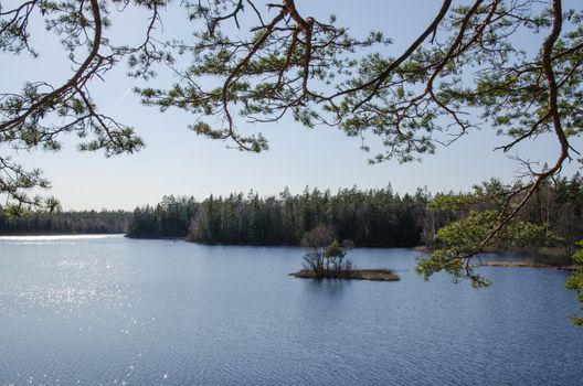 Woodland lake view