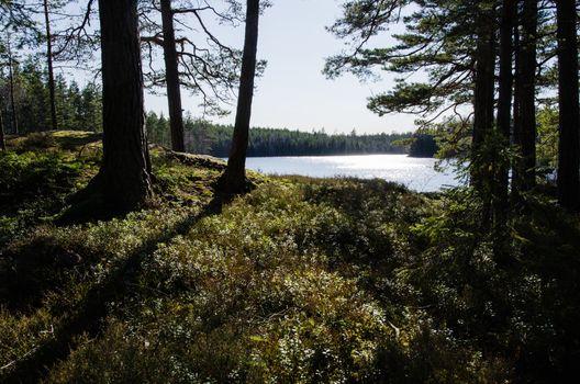 Glittering lake view