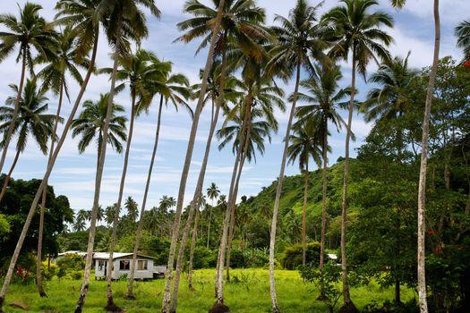 Local house in palm grove, Vanua Levu island, Fiji