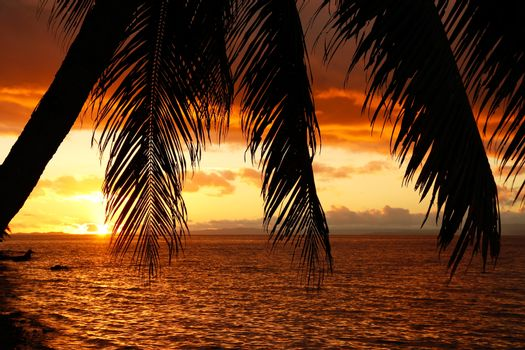 Silhouetted palm tree on a beach, Vanua Levu island, Fiji