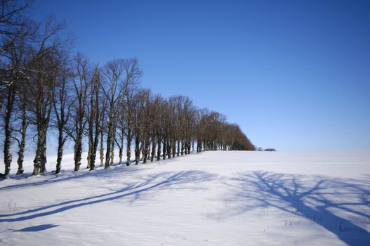 Trees on hill at winter