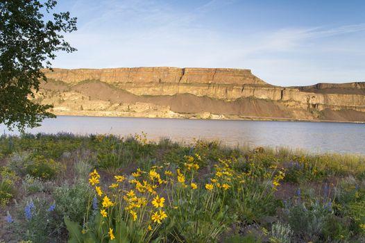 Wildflowers Around Banks Lake Steamboat Rock State Park