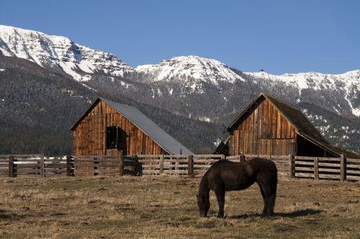Livestock Horse Grazing Natural Wood Barn Mountain Ranch Winter