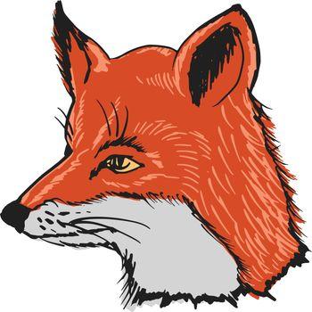 hand drawn, sketch, cartoon illustration of fox
