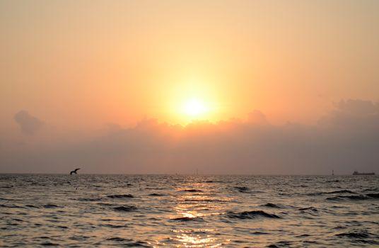 beautiful sunset with seagull