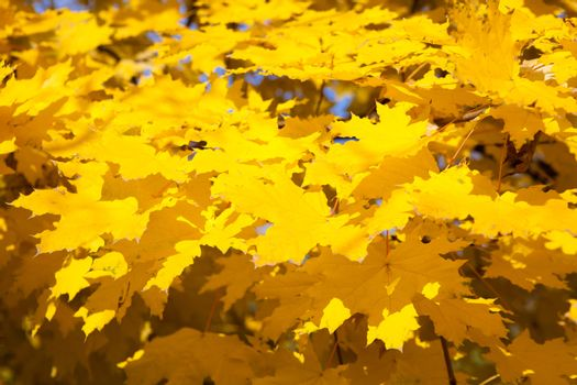 background with yellow leaves