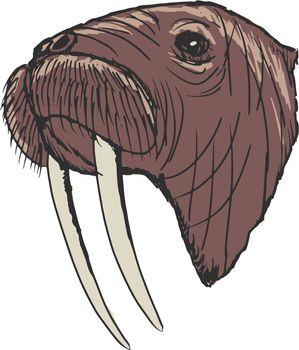 hand drawn, sketch, cartoon illustration of walrus