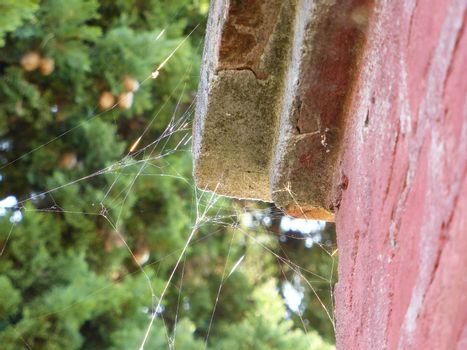 Spiderweb on old wall and sunlight
