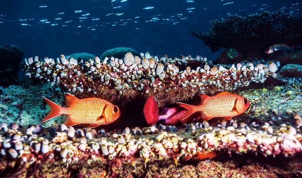 Beautiful underwater background