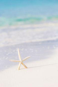 Cute sea star on seashore