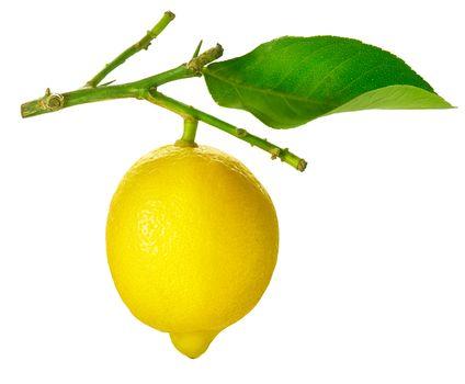 Lemon isolated on White. Fresh and Ripe Lemon