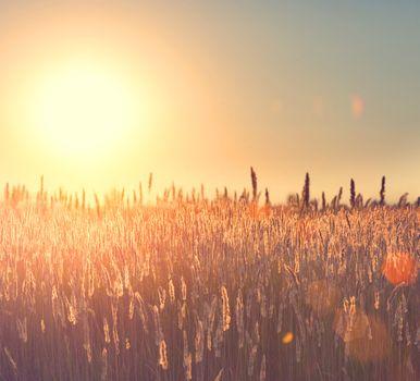 Field. Rural Landscape under Shining Sunlight