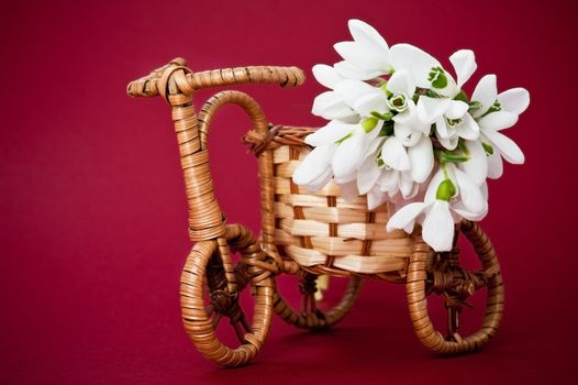 Wooden rods bicycle flowerpot with spring flowers on red background