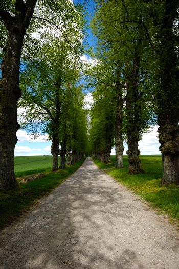 Pathway with trees