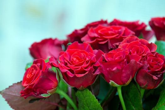 Close-up of a beautiful bouquet of red roses