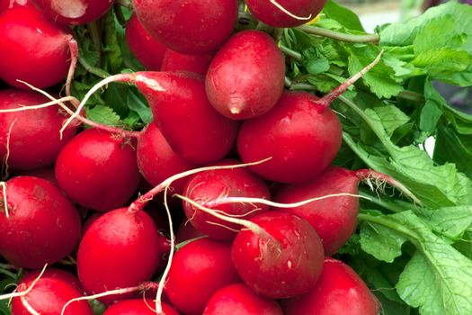 fresh radish with green leaves