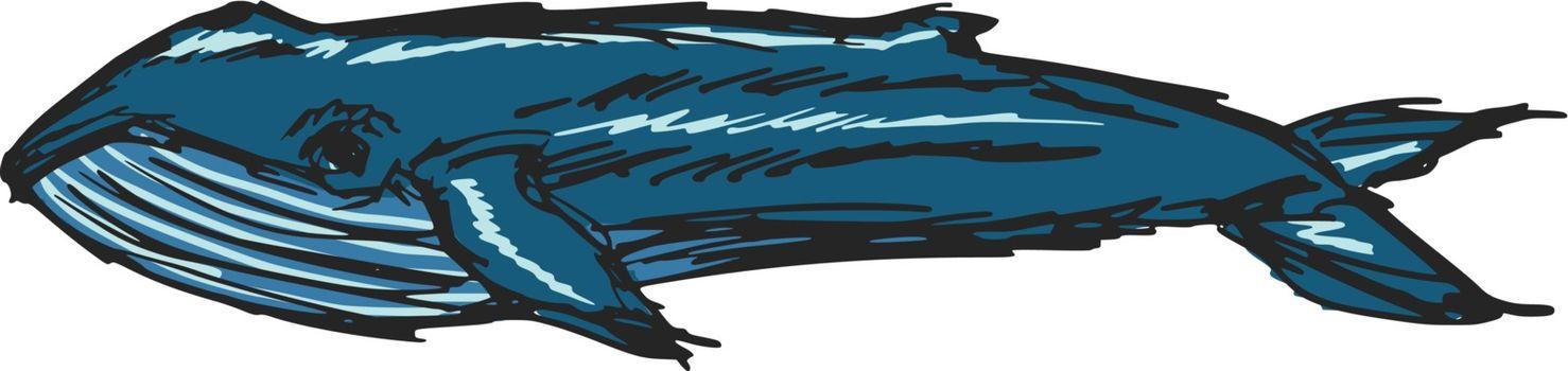hand drawn, sketch, cartoon illustration of whale