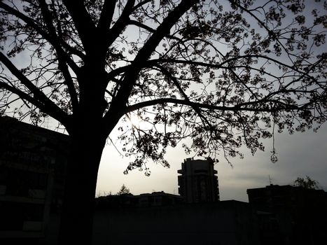 Tree and city silhouettes over sun on a cloudy afternoon