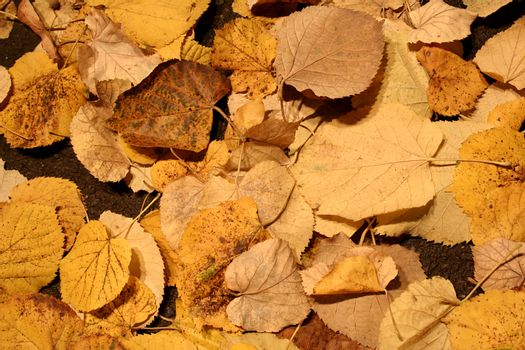 Autumn fall leaves. Great background. Good details.