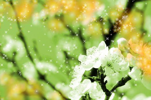 Close-up image of a white blossom over the blue sky