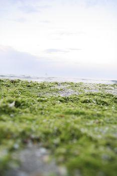 Beach with algae and shells.