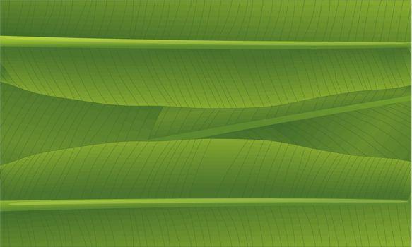 illustration of a banana leaf