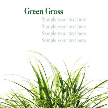 Fresh Spring Green Grass