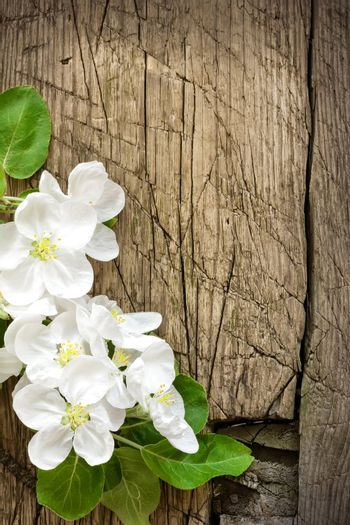 Blossoming branch