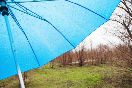 rainy umbrella in the park