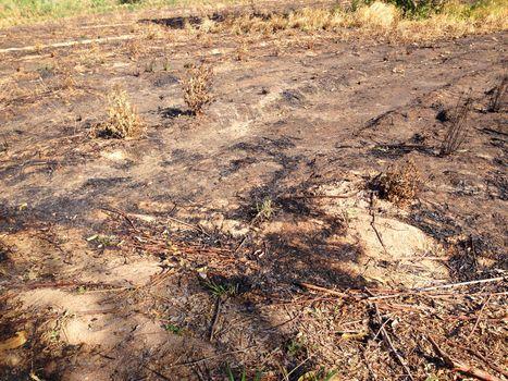 the barren field