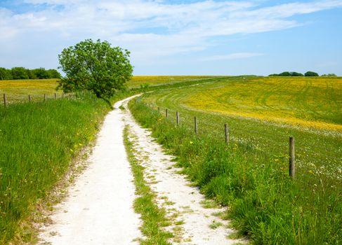 North Downs Way path