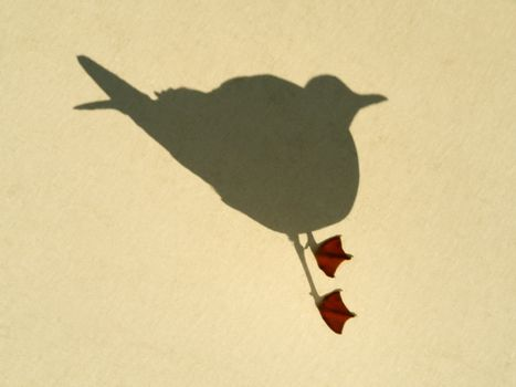Seagull on plane