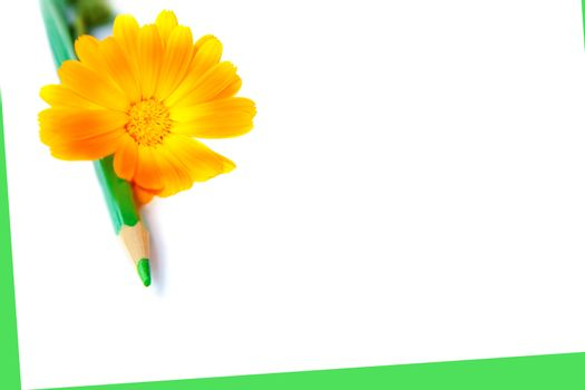 flower with green pencil