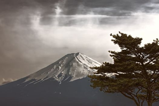 Mt Fuji photo made in retro stile with tree in front