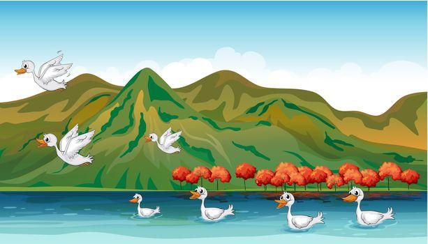 Ducks in quest of food