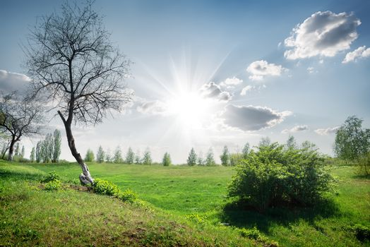 Sun and clouds in the spring field