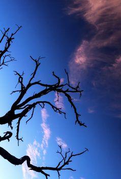 Alone dry tree