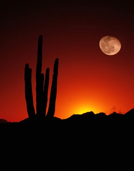 Vertical Desert Saguaro Cactus Full Moon Sunset American Southwest