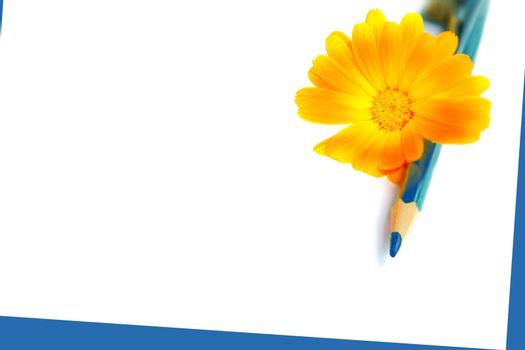 flower with blue pencil