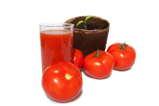 seedling of tomato, the same vegetables and juice