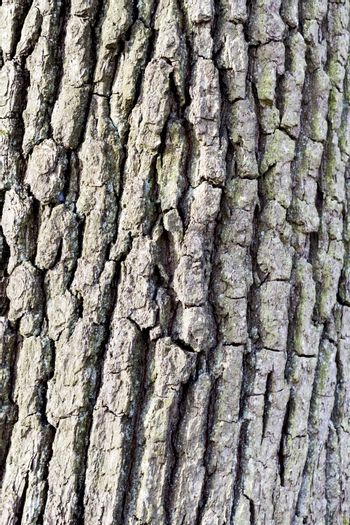vertical image showing rough bark of tree in close-up
