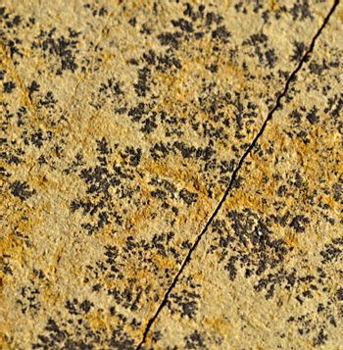 black patterns on the sandstone