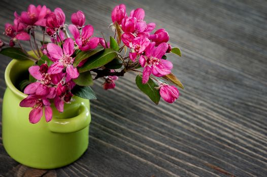 Pink cherry blossom in a green pot on a dark wooden background