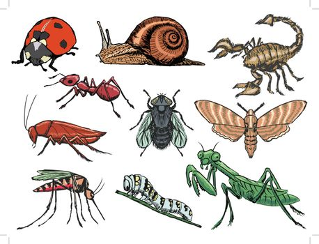 set of sketch illustration of different insects