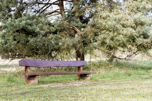 outdoor wooden bench with tree in background
