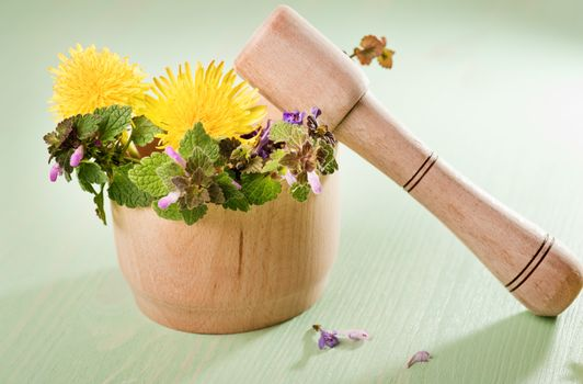 Fresh herbs and dandelions in a wooden mortar on a mint wooden table