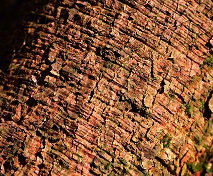 brown spruce bark
