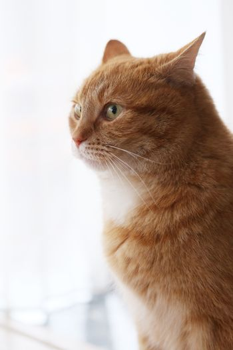 Cute, furry cat