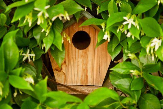Hidden Bird House